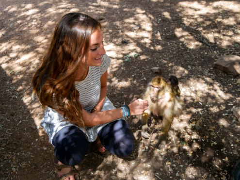 Travel girl feeding wild monkeys in Morocco