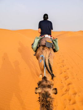 Biolite Solar Panel charging on a camel in the Sahara Desert