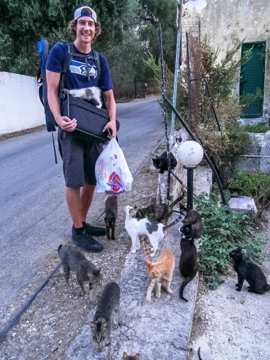 Cats in Corfu Greece