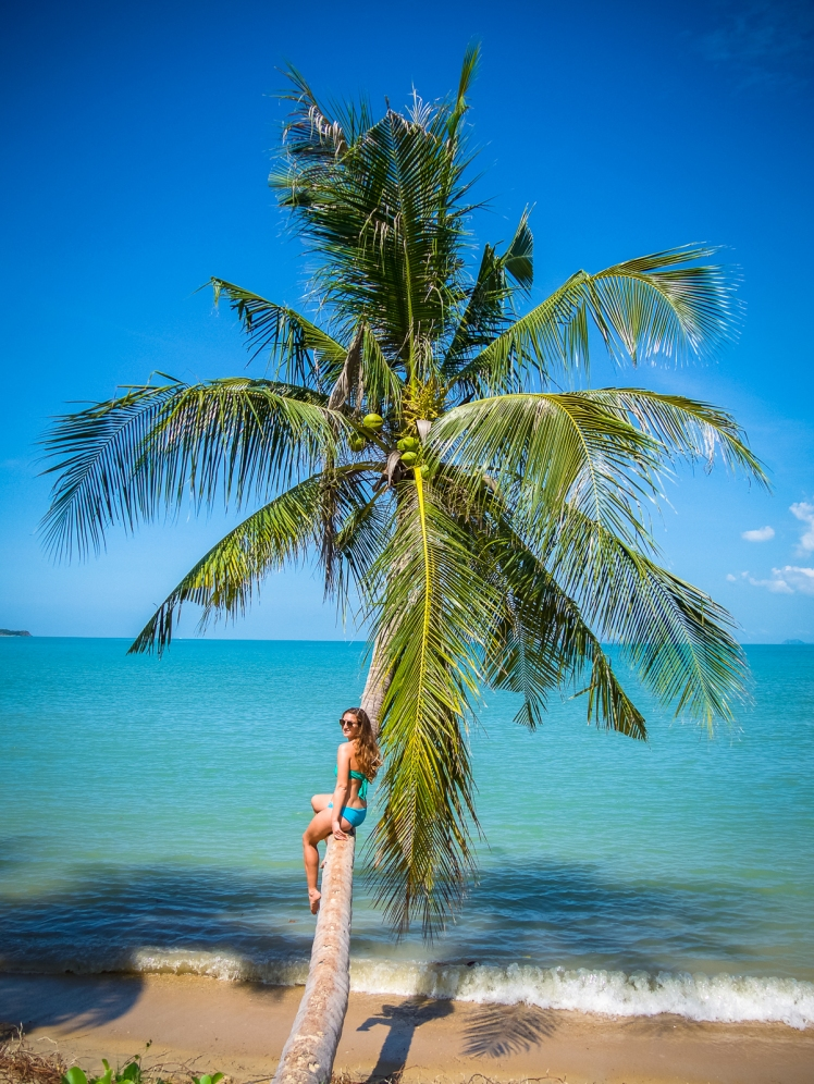 Palm tree over water in Koh Samui, Thailand