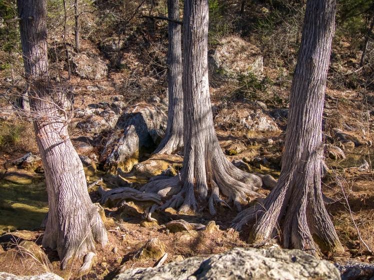 Trees at Hamilton Pool Preserve