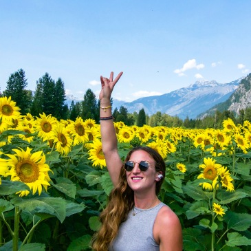 Sunflower fields Pemberton Canada